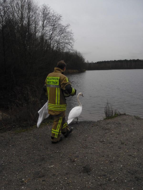 Schwan Rettung Feuerwehr 2