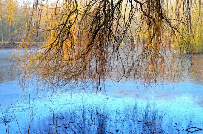 Stadtteich Schlagetterteich Teich Natur (4)